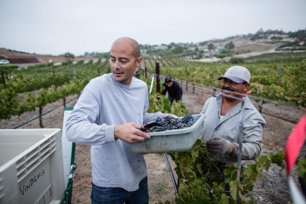 Migrant workers in a vineyard